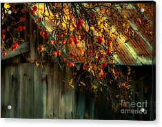 Apple Picking Time Acrylic Print by Sherman Perry