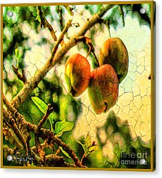 Apple  Season Acrylic Print