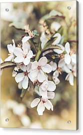 Acrylic Print featuring the photograph Apple Spice by Christi Kraft