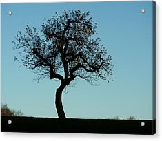 Apple Tree In November Acrylic Print