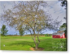 Apple Tree Acrylic Print by Kathleen Struckle