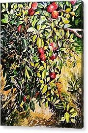 Acrylic Print featuring the painting Apple Tree by Priti Lathia