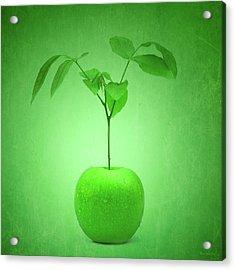 Apple Tree Acrylic Print by Wim Lanclus