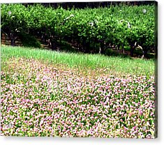 Apple Trees And Clover Acrylic Print by Will Borden