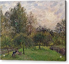 Apple Trees And Poplars In The Setting Sun Acrylic Print by Camille Pissarro