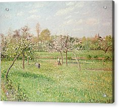Apple Trees At Gragny Acrylic Print