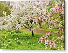 Apple Trees In Bloom Acrylic Print by Jessica Jenney