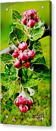 Apples In Waiting Acrylic Print
