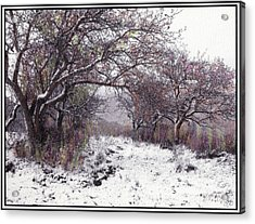 Acrylic Print featuring the photograph Apples Of The Asquamchumaukee by Wayne King