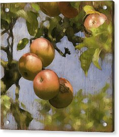 Apples On Wood Panel Acrylic Print