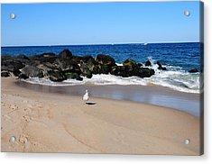 Approaching Seagull Acrylic Print by JoAnn Lense