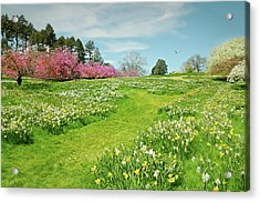 Acrylic Print featuring the photograph April Days by Diana Angstadt