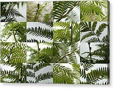 April Ferns 2 Acrylic Print