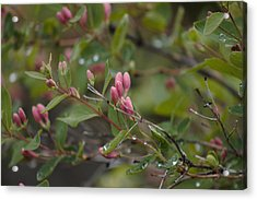 Acrylic Print featuring the photograph April Showers 2 by Antonio Romero