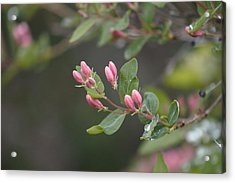 Acrylic Print featuring the photograph April Showers 3 by Antonio Romero