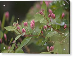 Acrylic Print featuring the photograph April Showers 4 by Antonio Romero
