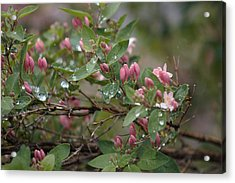 Acrylic Print featuring the photograph April Showers 6 by Antonio Romero