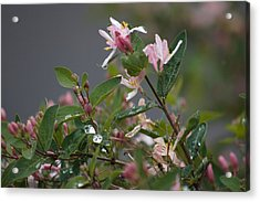 Acrylic Print featuring the photograph April Showers 7 by Antonio Romero