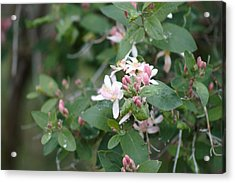 Acrylic Print featuring the photograph April Showers 9 by Antonio Romero