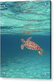 Acrylic Print featuring the photograph Aqua Dreams by Li Newton