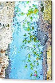 Aqua Metallic Clear Acrylic Print by Tony Rubino
