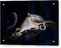 Aquatic Red Wing Fan Acrylic Print by LeeAnn McLaneGoetz McLaneGoetzStudioLLCcom