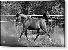 Arab At Play Bw Acrylic Print