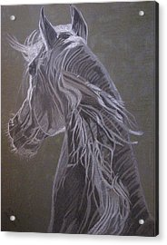 Acrylic Print featuring the drawing Arab Horse by Melita Safran