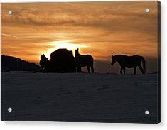 Acrylic Print featuring the photograph Arab Horses At Sunset by Daniel Hebard