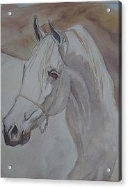 Arab Stallion In The Desert Acrylic Print
