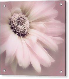 Arabesque In Ballet Pink Acrylic Print