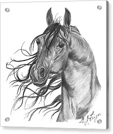 Arabian Head Acrylic Print by Gail Finger