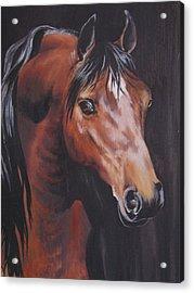 Arabian Horse 1 Acrylic Print