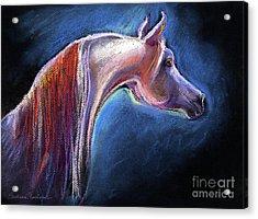 Arabian Horse Equine Painting Acrylic Print by Svetlana Novikova