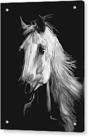 Acrylic Print featuring the drawing Arabian by Rachel Hames