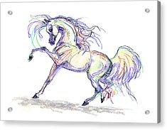 Arabian Stallion Talk Acrylic Print