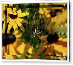 Acrylic Print featuring the photograph Arachnid Beauty by Deborah Johnson