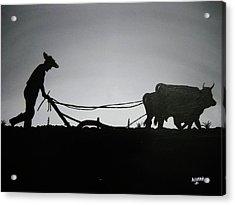 Arando Con Bueyes Acrylic Print by Edwin Alverio