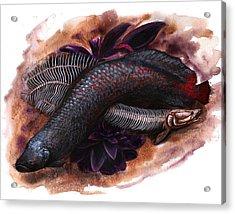 Arapaima Illustration Acrylic Print by Danielle Trudeau