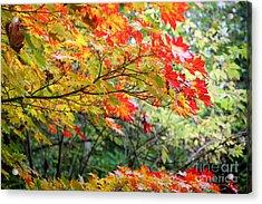 Arboretum Autumn Leaves Acrylic Print