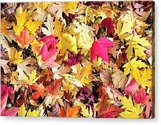 Arboretum Maple Leaves Acrylic Print