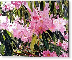 Arboretum Rhododendrons Acrylic Print