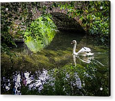Arched Bridge And Swan At Doneraile Park Acrylic Print