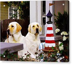 Archie And Jackie Acrylic Print by Alice Schear