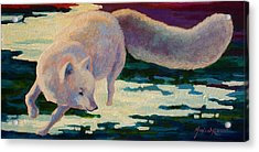 Arctic Fox Acrylic Print by Marion Rose
