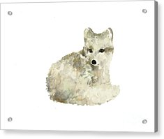 Arctic Fox Watercolor Art Print Painting Acrylic Print by Joanna Szmerdt