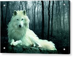 Arctic Wolf Acrylic Print by Julie L Hoddinott