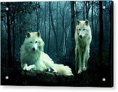 Arctic Wolves Acrylic Print by Julie L Hoddinott