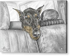 Acrylic Print featuring the drawing Are We There Yet - Doberman Pinscher Dog Print Color Tinted by Kelli Swan