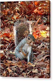Are You Friendly Acrylic Print